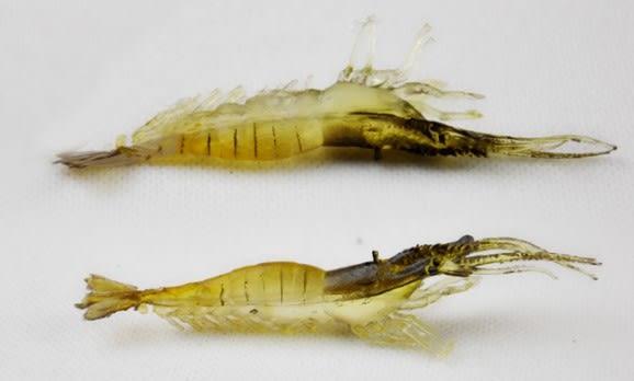 [協貿國際] 9.5cm超逼真軟蝦大蝦  10 個價