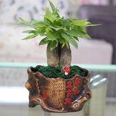 春季上新 發財樹花盆復古陶瓷盆花卉綠蘿大小盆堅持盆白搭土陶罐手工