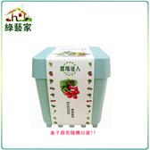 【綠藝家】iPlant小農場系列-櫻桃蘿蔔