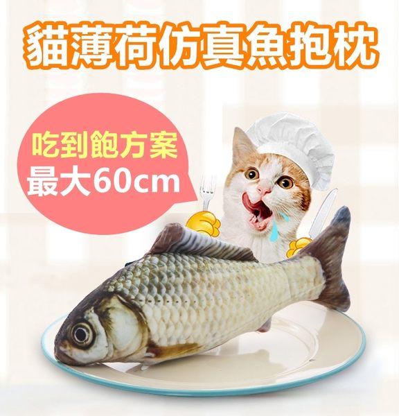 仿真鯽魚抱枕 貓草抱枕 貓薄荷 貓草 抱枕 秋刀魚 鯉魚 貓玩具 聖誕節 交換禮物 60cm【RS677】