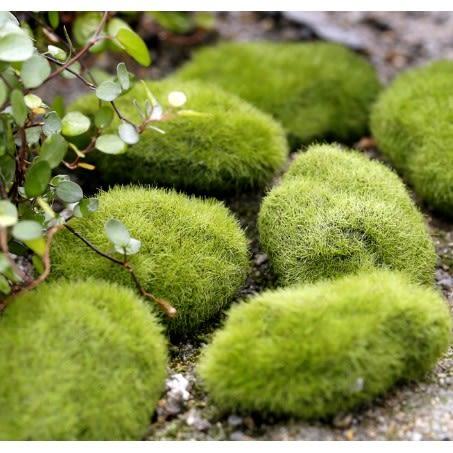 ⓒ48H內出貨🔥仿真苔蘚微景觀 假苔蘚石頭 多肉植物創意微景觀【A013001】