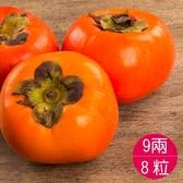 摩天嶺甜柿9A8粒-季節限定
