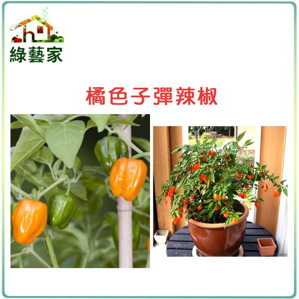 【綠藝家】G72.橘色子彈辣椒種子5顆