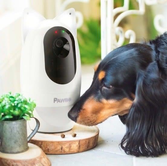 Pawbo - 寵物攝影機 + 貓耳夜間感應燈