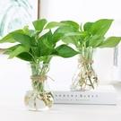透明水培綠蘿玻璃花瓶植物花瓶客廳插花擺件