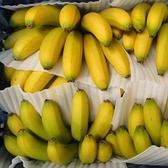 南投香蕉8台斤