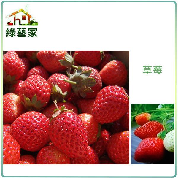 【綠藝家】大包裝I05.草莓種子(阿里巴巴)600顆