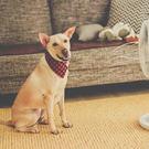 ‧新式專利棉織帶設計 ‧無漆、無蠟設計 ‧耐用度提昇100%、柔軟度提昇50% ‧貼心服務無價