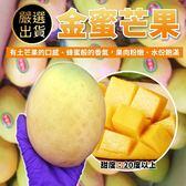 【果之蔬-全省免運】金蜜芒果X10台斤±10%(含箱重 約16-18顆)土芒果的口感、蜂蜜般的香氣