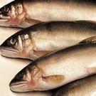 ㊣盅龐水產 ◇公香魚7隻裝◇ 920g±5%/盒 ◇ 零$275/盒 魚肉鮮嫩 挑戰低價 歡迎批發