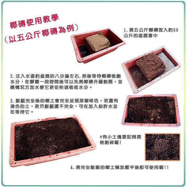 【綠藝家】中型蔬菜DIY超值組合(型號Z01A)