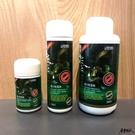 ISTA 伊士達【優質強力除藻劑 120ml】可去除絲狀藻、褐藻等 魚事職人