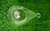 平底 水滴型微景觀玻璃花器 多肉仙人掌組合花器 ☆插花.居家擺飾.園藝☆