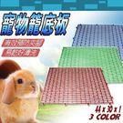 【zoo寵物商城】寵物專用》艷彩寵物籠踏板30cm × 44cm (讓寵物不卡腳~更舒服)