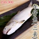 ㊣盅龐水產◇午仔魚250/300(三去)...