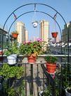 攀援蔬菜爬藤架 薔薇葡藤蔓搭架加固鐵藝婚慶 拱門地面花架