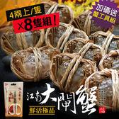 送大閘蟹工具組【屏聚美食】肥美鮮活江南大閘蟹8隻組(4兩上/隻)