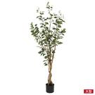 ◆附盆栽人造植物擺飾 150cm New Ficus NITORI宜得利家居