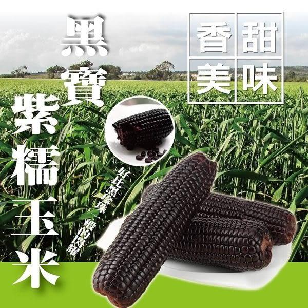 【WANG-全省免運】黑寶紫糯米玉米X10斤±10%(250-300克±10%/根)