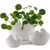 北歐現代簡約白色陶瓷花器 銅錢草仿真植物 客廳白色陶瓷裝飾花瓶第七公社