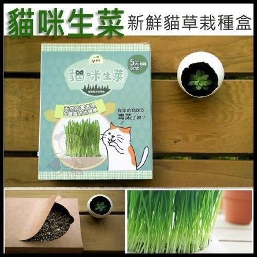 *KING WANG*《貓咪生菜》新鮮貓草栽種盒