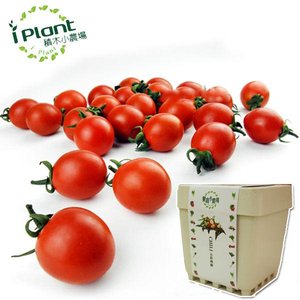【 iPlant 積木小農場 - 小番茄 】多肉療鬱青菜香草種子植栽盆栽開心農場【心安購物】