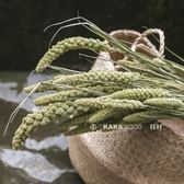 北歐日式天然植物干花永生干燥花 烘干自然綠—小米穗子 新品推薦 可卡衣櫃