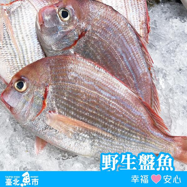 【台北魚市】 盤魚(盤仔魚) 210g~240g