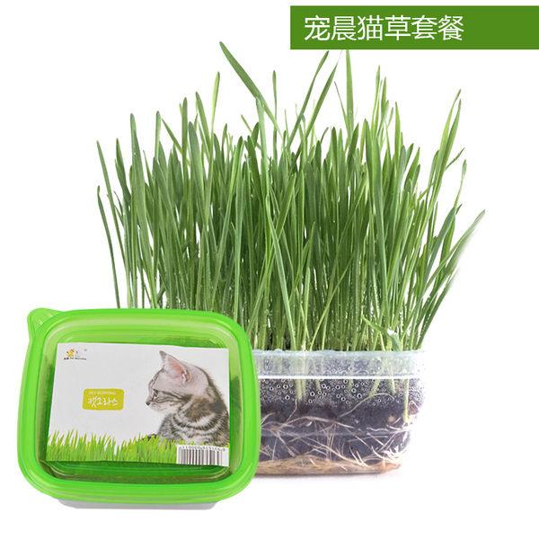 貓零食 貓草種子小麥去毛球助消化