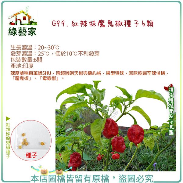 【綠藝家】G99.紅辣妹魔鬼椒種子6顆