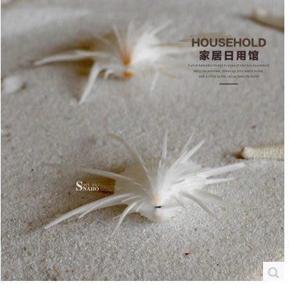 【海韻J】天然海螺/海星/貝殼道具拍攝婚禮布2個組