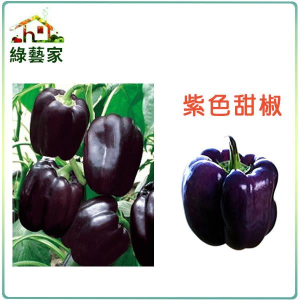 【綠藝家】G17.紫色甜椒種子3顆