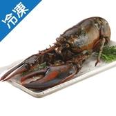 【老饕最愛】肥美鮮甜波士頓龍蝦(生凍)400~500G/ 隻【愛買冷凍】