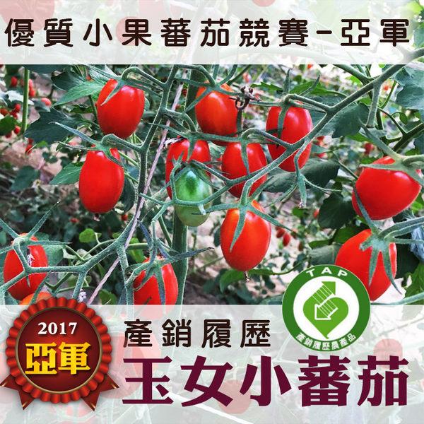 產銷履歷玉女小蕃茄10盒免運組
