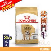 BHN皇家FMB24法國鬥牛成犬FBDA 3kg【寶羅寵品】