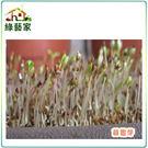 【綠藝家】大包裝苜蓿芽種子240公克(苜蓿芽種子)