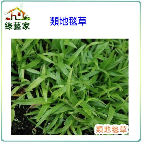 【綠藝家】類地毯草種子80克