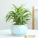 青瓷多肉蝴蝶蘭專用花盆帶托盤陶瓷綠植蘭花盆超級品牌【小獅子】