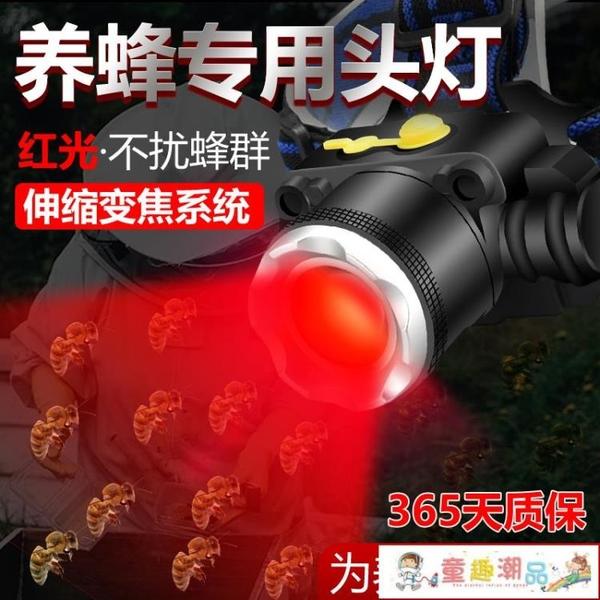 頭燈 紅光養蜂專用頭燈查蜂取蜜抓蜜蜂燈頭戴式手電筒調焦紅白雙光源 童趣