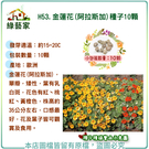【綠藝家】H53.金蓮花(阿拉斯加)種子10顆