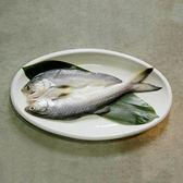 ㊣盅龐水產◇午仔魚一夜干180/200◇180g±5%/尾◇零$130元/盒◇ 魚肉細緻 油脂豐富 零售 批發