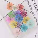雪珠花蕾絲花,壓花,混色60朵,共12色