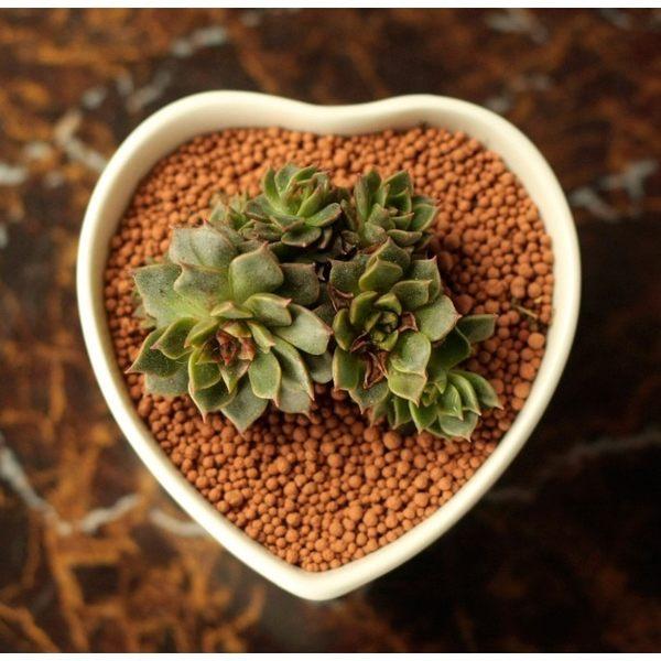 CARMO*小號*愛心型陶瓷花盆 多肉植物盆栽【BI23001】