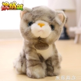 公仔 超萌仿真小貓咪毛絨玩具公仔可愛韓國迷你小號娃娃寶寶生日禮物 米希美衣