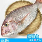 【台北魚市】  嘉鱲魚(迦納魚)  350g