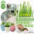 懶人種植水耕法設計,只需裝水就可以種植,種植後長成約7-8天,可重複收成使用。