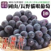 【果之蔬-全省免運】日本長野/岡山貓眼巨峰葡萄1串(每串約350g±10%含盒重)
