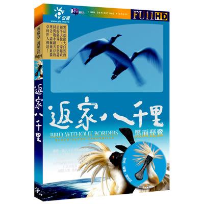 返家八千里-黑面琵鷺DVD