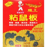 鱷王粘鼠板(大) 245x295mm/2片(黏鼠板)