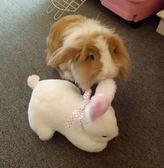 可愛小白兔子毛絨玩具趴趴兔玩偶公仔抱枕生日兒童生日禮物 女生